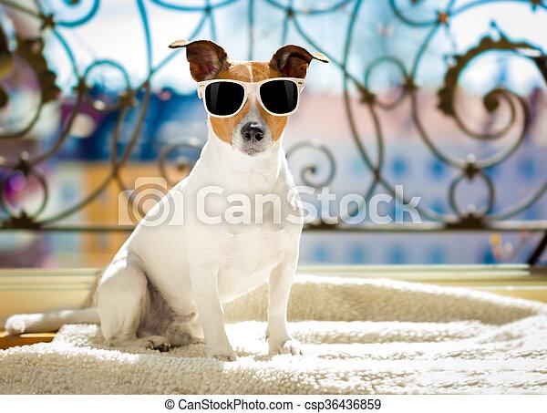 sommer, hund, balkon - csp36436859