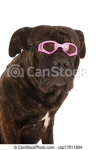 sommer, hund - csp17811894