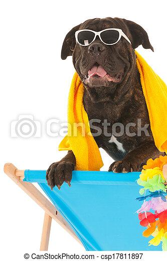 sommer, hund - csp17811897