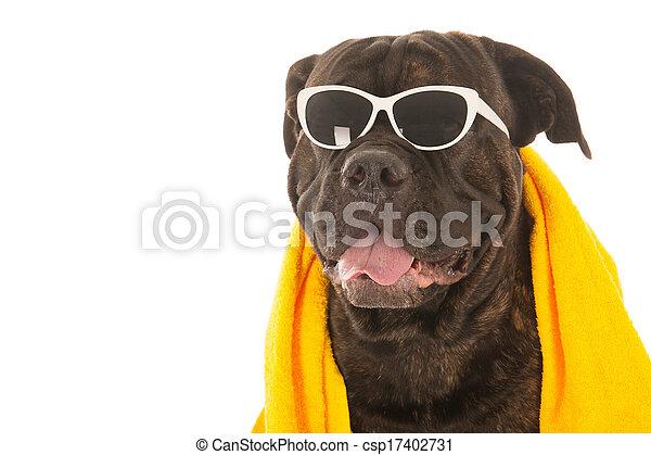 sommer, hund - csp17402731