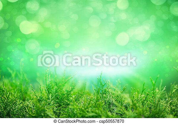 Thuja occidentalis, grüner Sommer Hintergrund - csp50557870