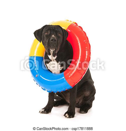 sommer, spielzeug- hund, schwimmender - csp17811888