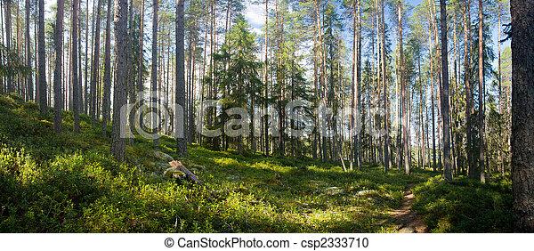 Sommerwald - csp2333710