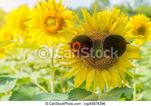 sonnenblumen sonnenbrille kleingarten sonnenblume bl hen garden sonnenblumen. Black Bedroom Furniture Sets. Home Design Ideas