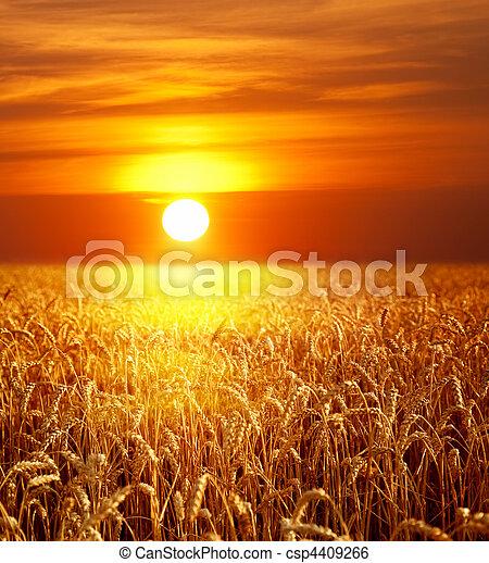 sonnenuntergang, landschaftsbild - csp4409266