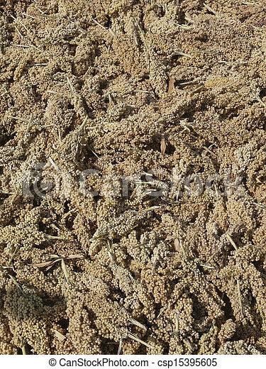 Maíz de sorgo bicolor, mandíbula - csp15395605