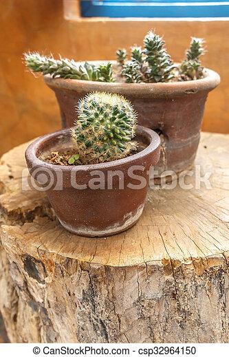 souche, jardin, foyer sélectif, bois, petit, cactus - csp32964150
