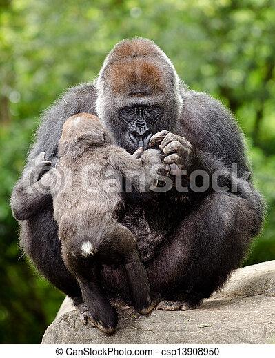 soucier, gorille, jeune, femme - csp13908950