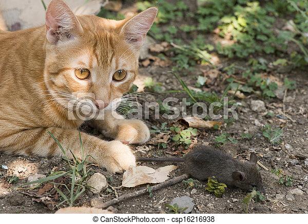 souris jardin chat garden attraper souris chat photos de stock rechercher des. Black Bedroom Furniture Sets. Home Design Ideas