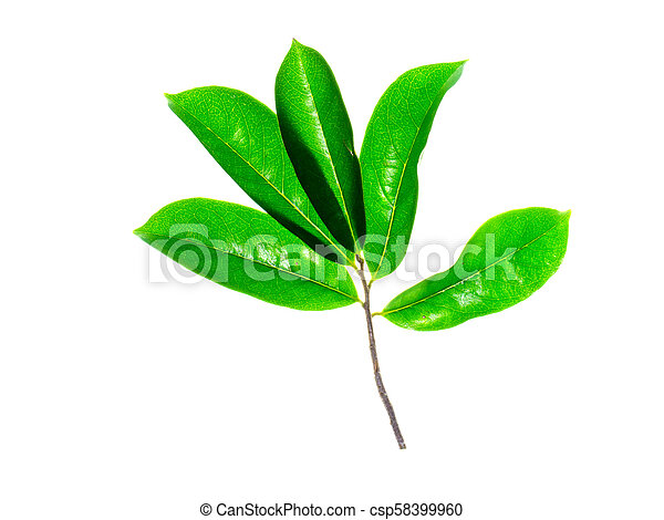 Images Of Soursop Leaves
