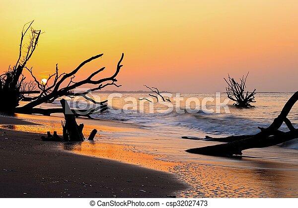 South Carolina Boneyard Beach - csp32027473