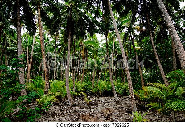 South Pacific Rain Forest Jungle  - csp17029625