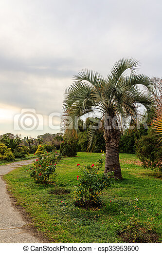 south park with palm trees - csp33953600