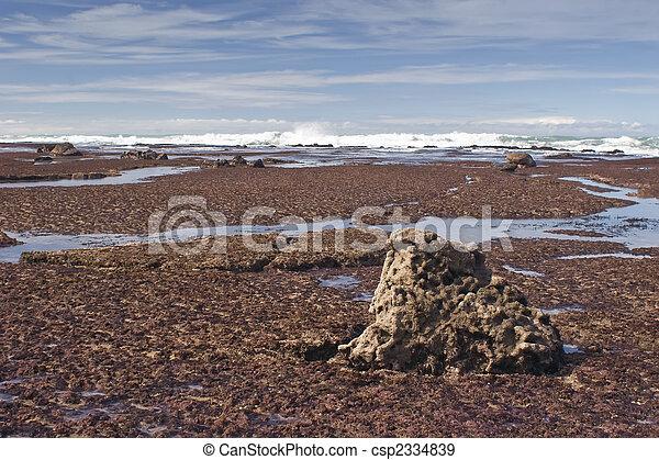 Southern Hawkes Bay Coast 03 - csp2334839