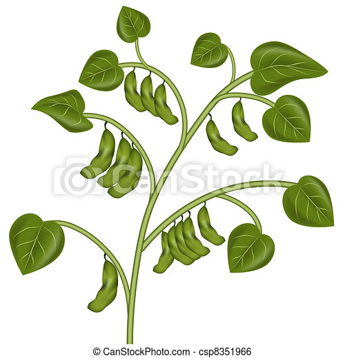 an image of a soybean plant clip art vector search drawings and rh canstockphoto com soybean clipart free soybean clipart free