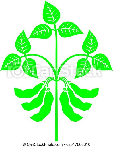 soybean plant vector illustration vector clip art search rh canstockphoto com soybean clipart free soybean clipart black and white