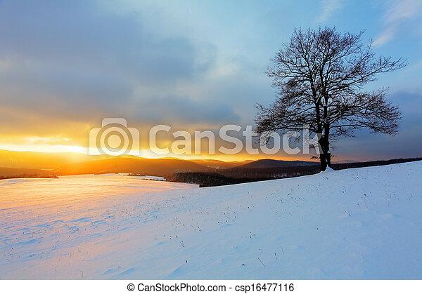sozinha, pôr do sol, árvore, prado, inverno - csp16477116