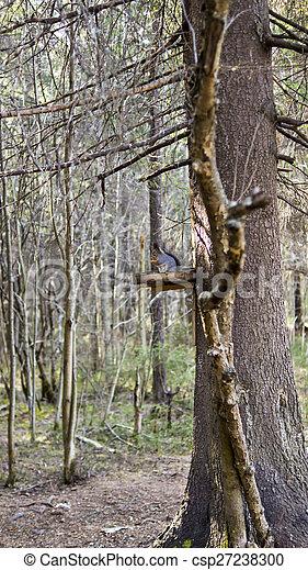 spécial, forêts, écureuil, nourrisseur - csp27238300