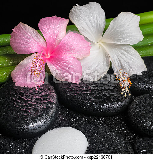 Spa Setting Of White Pink Hibiscus Flowers Symbol Yin Yang And