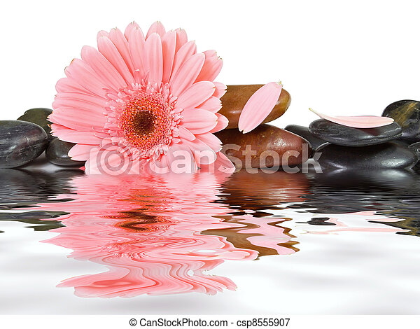 Spa stones and pink daisy on isolated white background - csp8555907