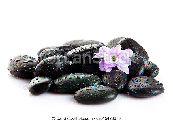 Spa stones and purple flower, isolated on white. flower in stone with drops of water - csp15423670