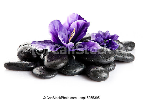 Spa stones and purple flower, isolated on white. flower in stone with drops of water - csp15355395