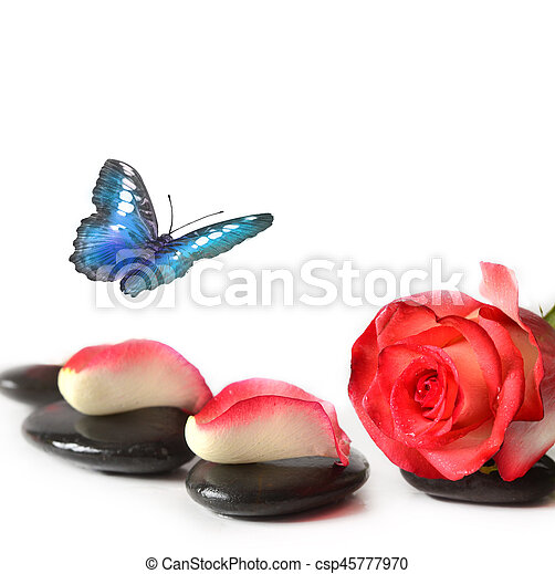 Spa stones with rose flower and butterfly on a white background. - csp45777970