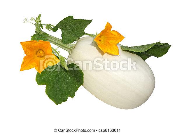 Spaghetti squash flower spaghetti squash flowers isolated on white spaghetti squash flower csp6163011 mightylinksfo
