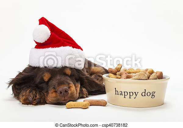 3e33cd1eb61fb image 0. spaniel puppy dog in christmas hat by bowl of biscuits ...