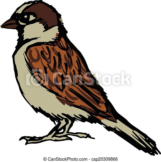 hand drawn sketch cartoon illustration of sparrow rh canstockphoto com sparrow clipart images house sparrow clipart