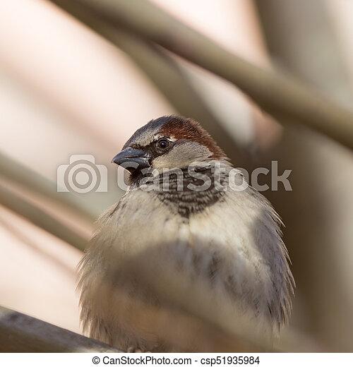 sparrow close up - csp51935984