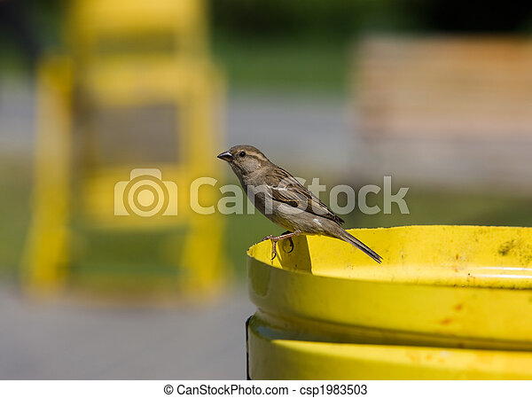 Sparrow in park - csp1983503