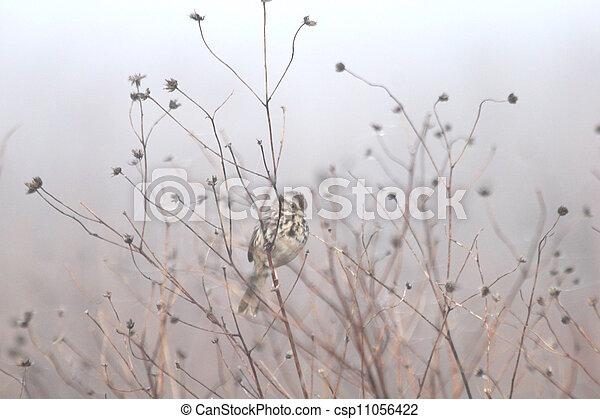 sparrow in weeds - csp11056422