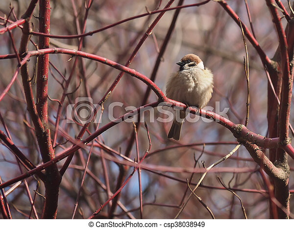 Sparrow on a branch in the forest - csp38038949