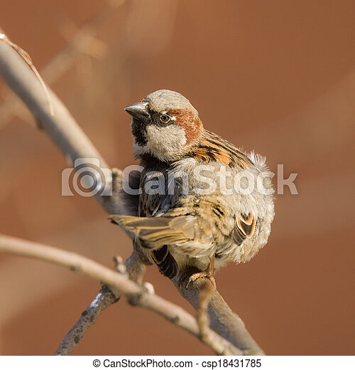 sparrow on a tree branch - csp18431785