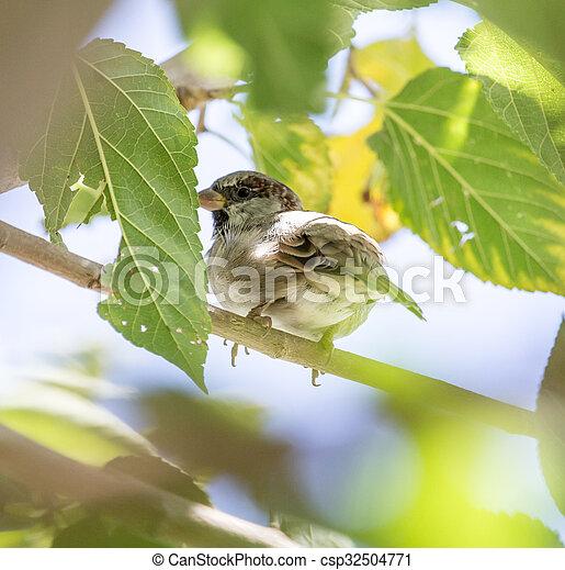Sparrow on a tree - csp32504771