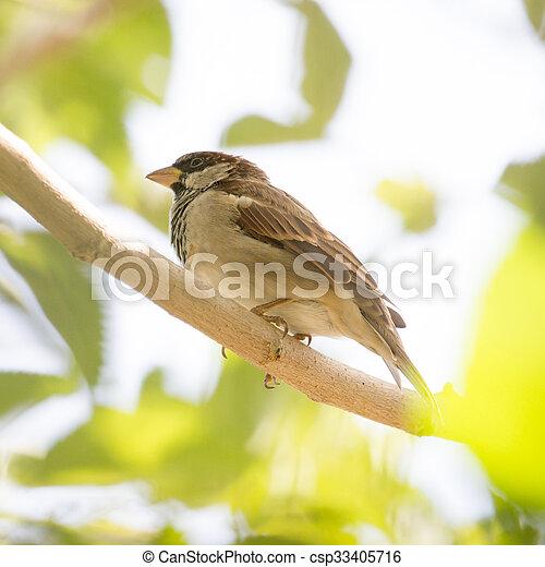 Sparrow on a tree - csp33405716