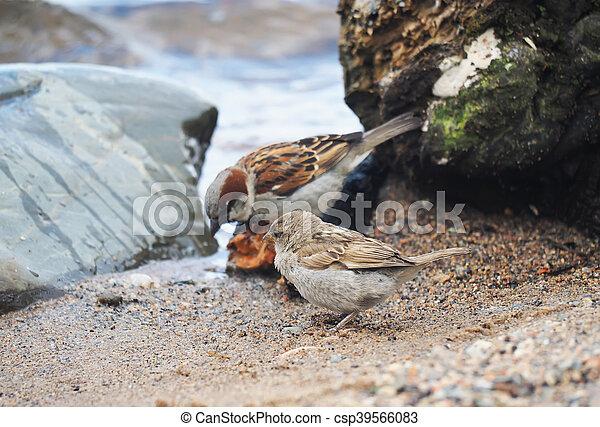 Sparrow on the lake - csp39566083