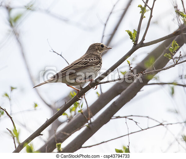 Sparrow on the tree in nature - csp43794733