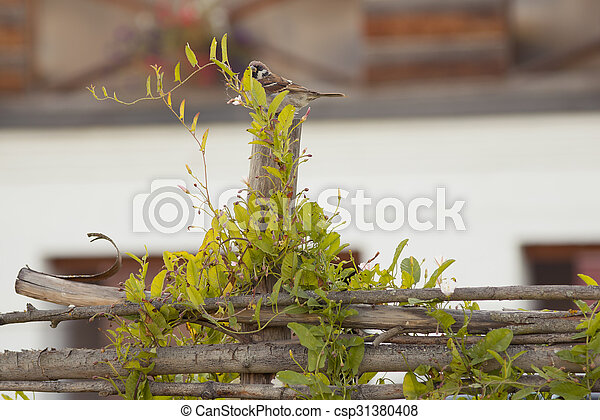 Sparrow on the wooden fence - csp31380408
