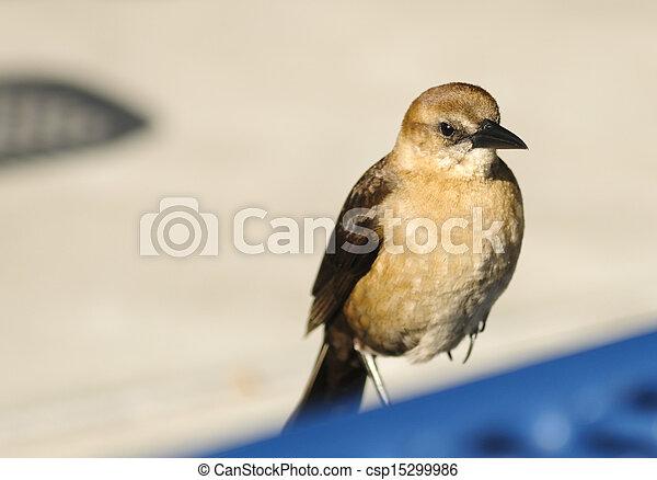 sparrow - csp15299986