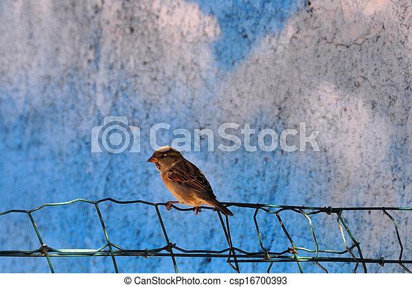 sparrow small bird - csp16700393