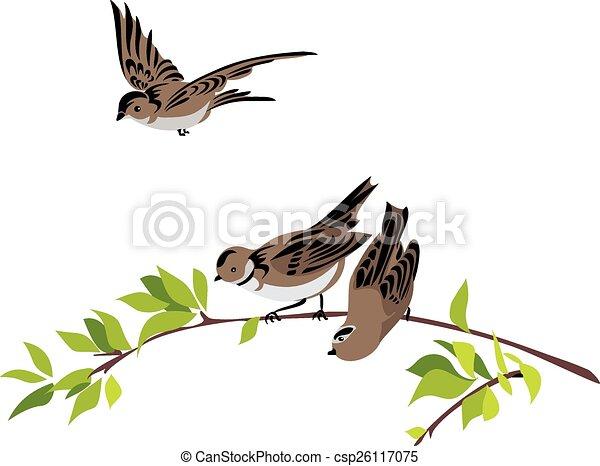 Sparrows - csp26117075
