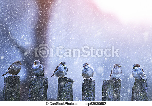 Sparrows in a row on wooden fence - csp63530682