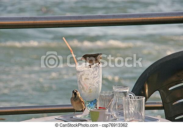 Sparrows in Venetian outdoor restaurant - csp76913362