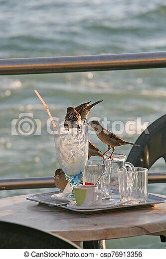 Sparrows in Venetian outdoor restaurant - csp76913356