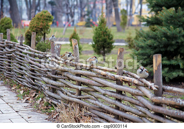 Sparrows on a wooden fence - csp9303114
