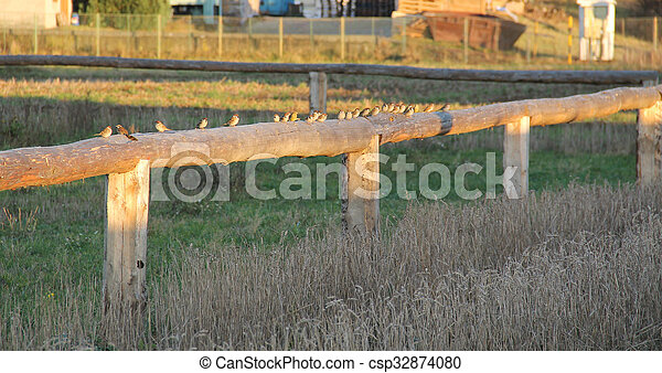 sparrows on the fence - csp32874080