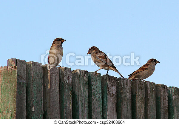 sparrows on the fence - csp32403664