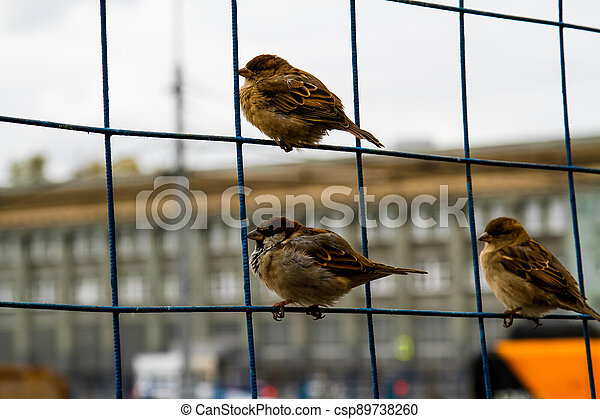 Sparrows on the net fence - csp89738260